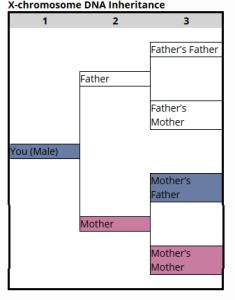 DNA Male X-Chromosome